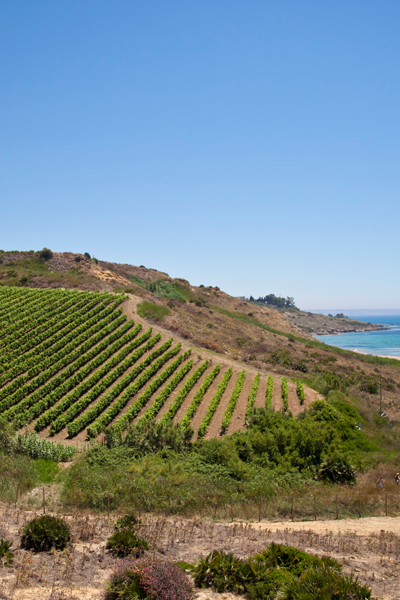 Settesoli Coastal Vineyards