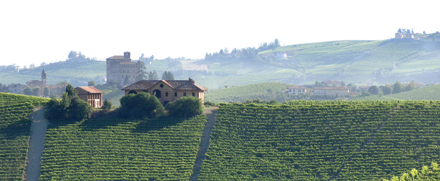 Fontanafredda Vineyards